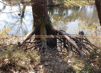 ForêtLandaise30Mars2012 (5)