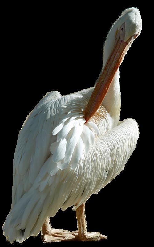 Oiseaux divers 2
