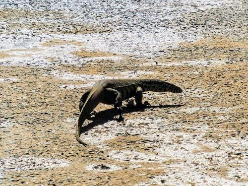 réserve de Hluhluwe; d'autres animaux sauvages