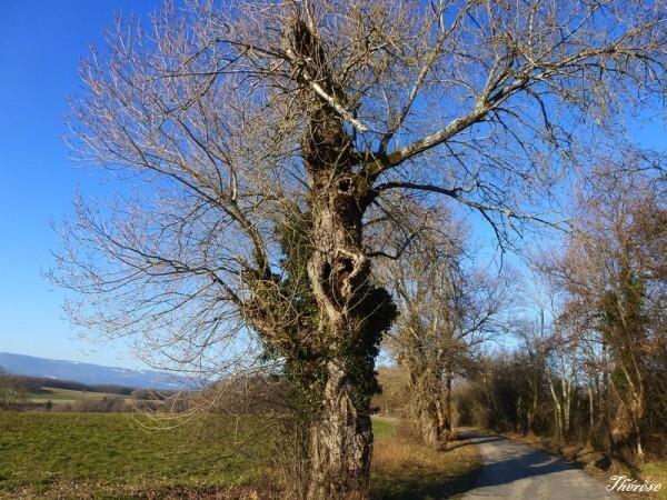 Troncs d'arbres (5)