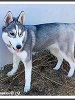 Mylka (4,5 mois)