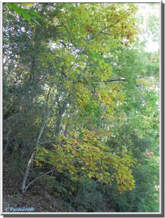 branche feuilles jaunes
