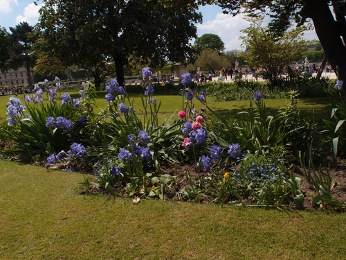 Paris - Iris et pivoine au jardin des Tuileries