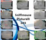PictureIt 203 - Sniffmouse