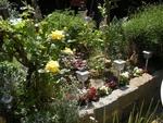 Premières fleurs au jardin,mai 2012