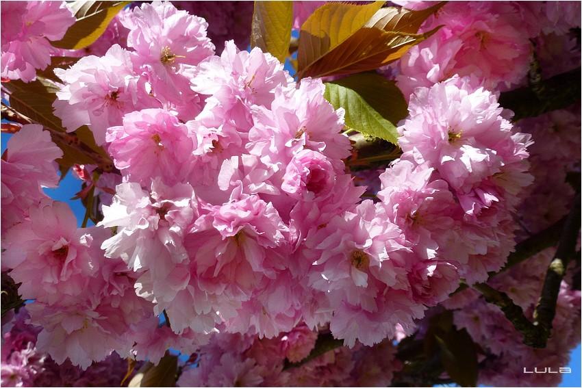Les floraisons en avril...