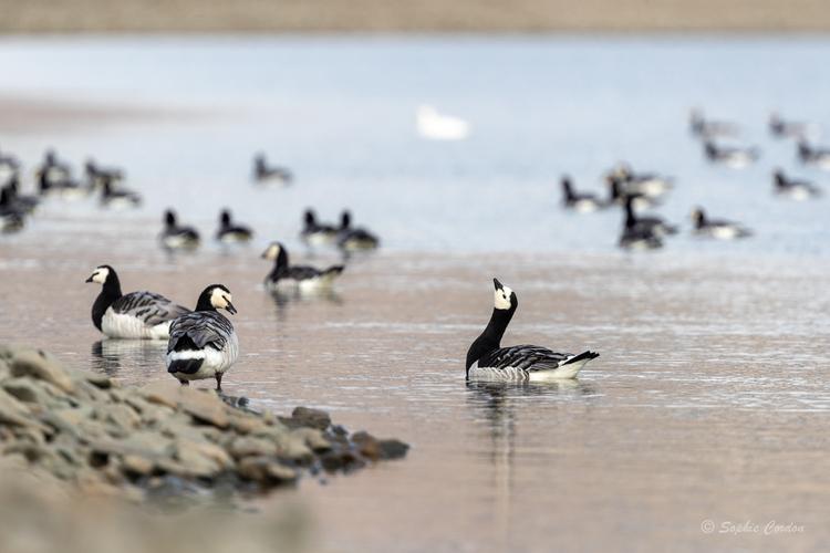 Dimanche, chasse au canard (suite)