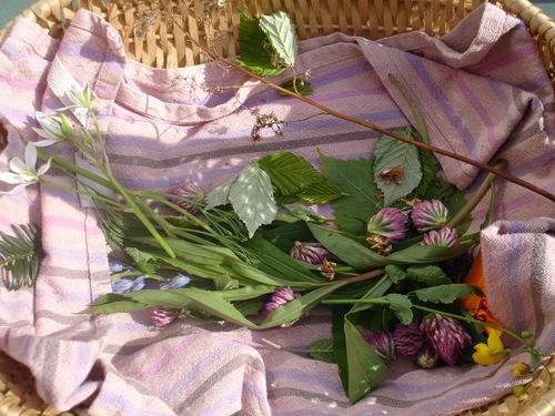 11 mai '14 - Balade sauvage du 3 mai avec Anja