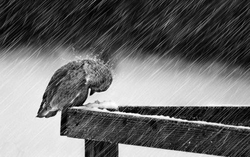 - La neige