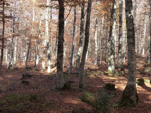 Sentier de la Hétraie (L'Espérou - Aigoual)