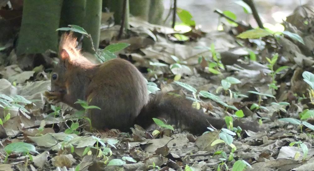 Les écureuils du Parc de Bourran, à Mérignac...