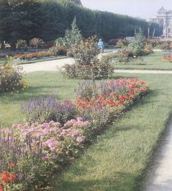 Le jardin des plantes et ses serres