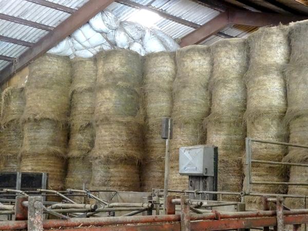 Visite de la ferme de la Guette, à Recey sur Ource, exploitation laitière biologique