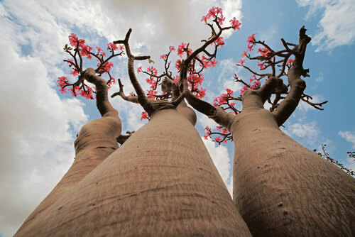 Défi de Khanel - l'arbre