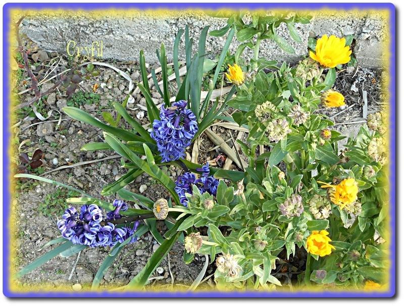 Quelques fleurettes