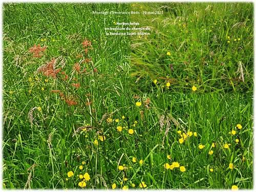Dans les herbes folles de la plaine de la Haute Mauldre