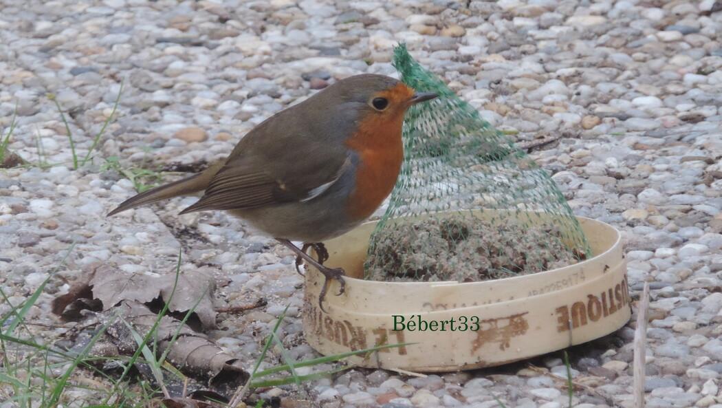 les oiseaux viennent manger ...