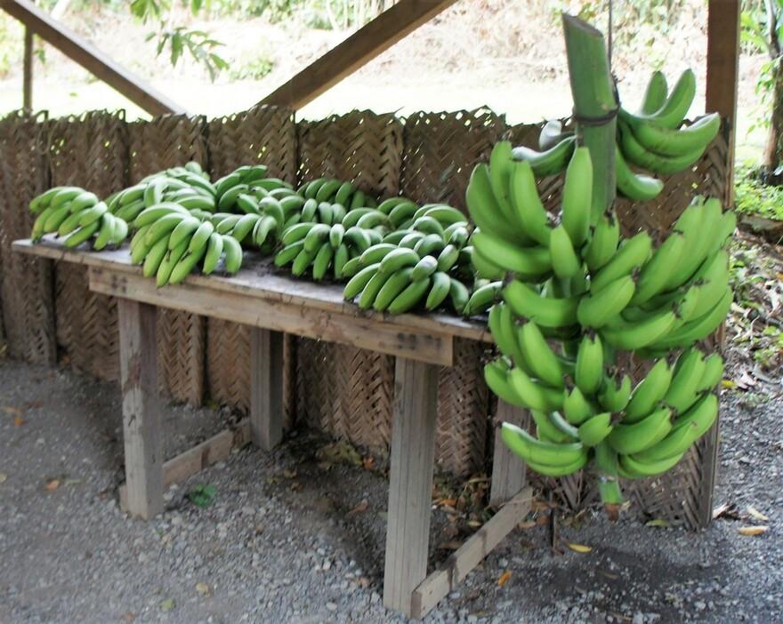 21/2/19 : Jardin des 1001 saveurs à la Réunion (6/7)...