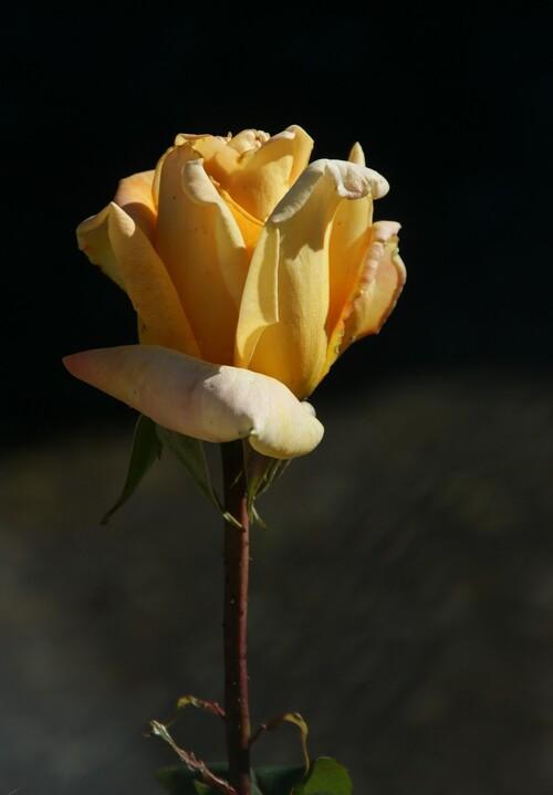 Défi Fleurs Jaunes