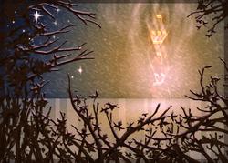 La sainte convocation de SOUKKOTH et de YOM CHEMIYNIY