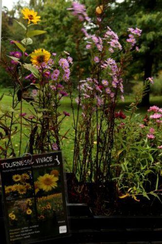 Fête des plantes à l'Institut de Genech