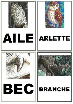 Imag'mots Les malheurs d'Arlette la chouette