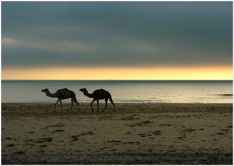 Le Maroc, Terre de contrastes et de lumières