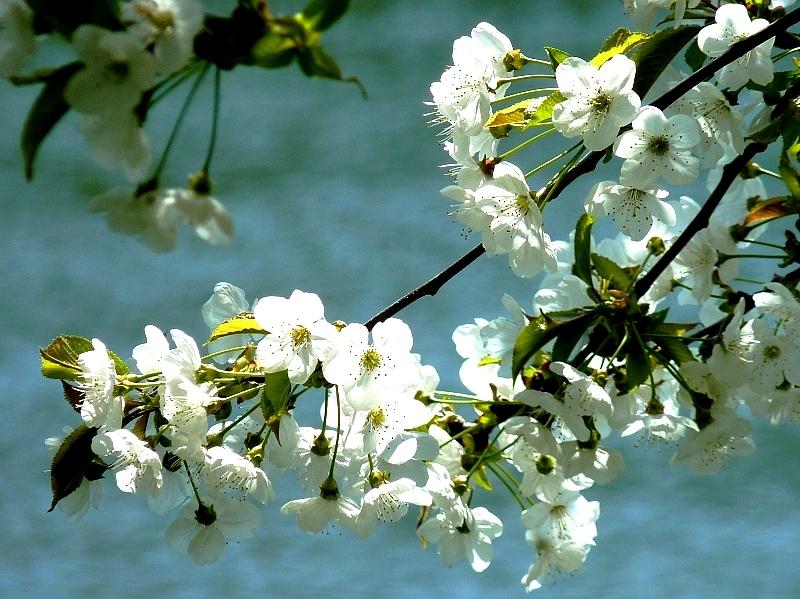 Metz / Un printemps Ying et Yang...