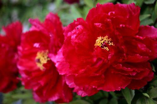 Roseraie - Avril - (3/4)