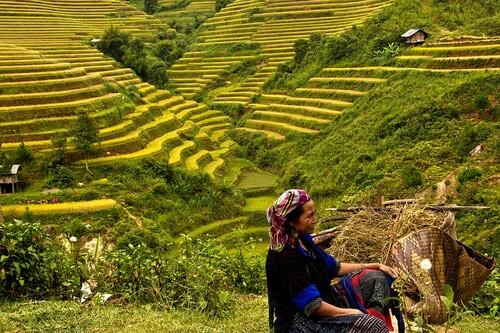 1-Circuit Marchés ethniques et rizières en terrasses