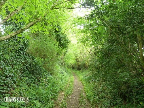 Le chemin du Marais....