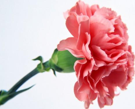 Virágok vegyesen
