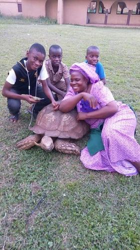 La tortue Alagba s'en est allée : elle avait 344 ans et c'était le plus vieil animal terrestre de la planète