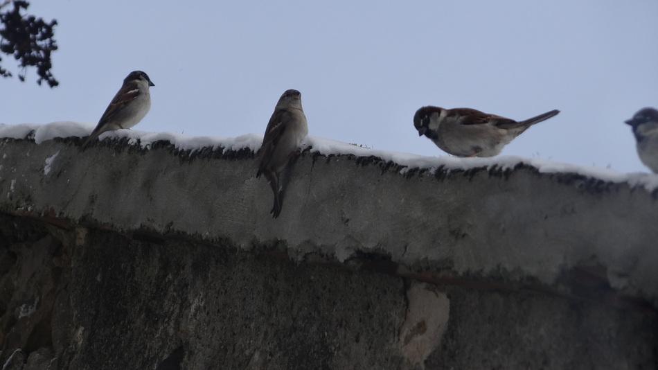 On Accueille les Oiseaux au Jardin...