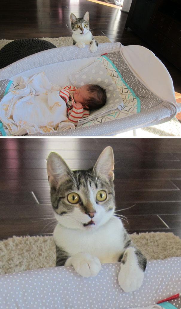 Les Petits Félins 2:  27 photos de chats expressifs