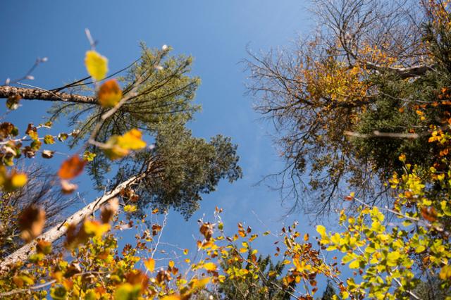 Berne ébauche un plan d'action pour la biodiversité