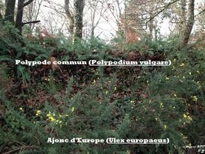 Chapitre 5: le peuplement d'un milieu par les végétaux
