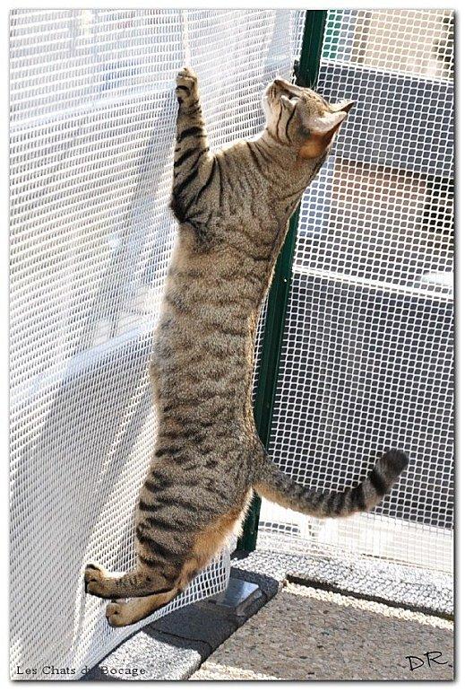s curit jardin balcon terrasse bienvenue chez dani et ses chats. Black Bedroom Furniture Sets. Home Design Ideas