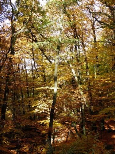 Forêt spa +