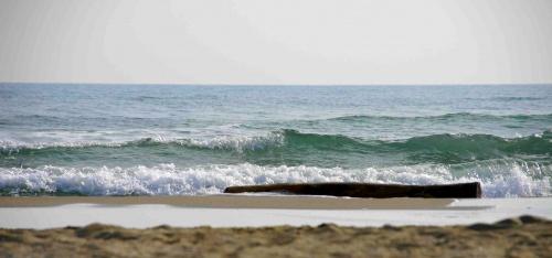 Sea tronc