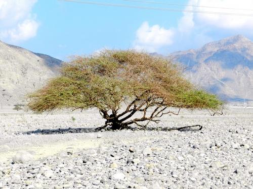 Musandam (Oman du nord)