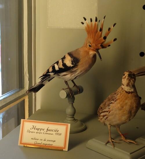 Après-midi au Muséum d'histoire naturelle de La Rochelle (1/2)...