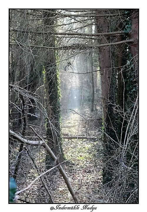 Nos belles forêt