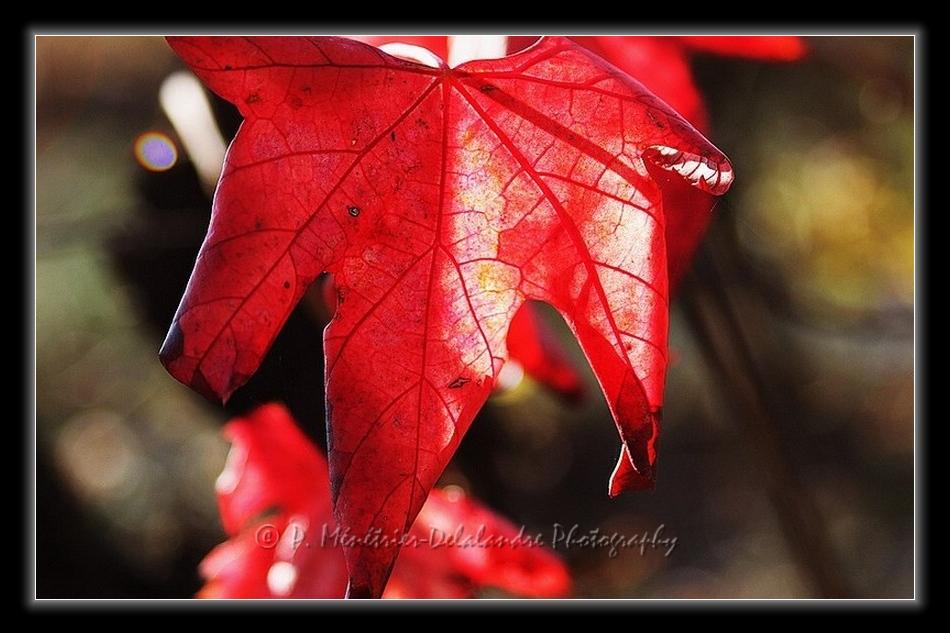 Rouge vigne...