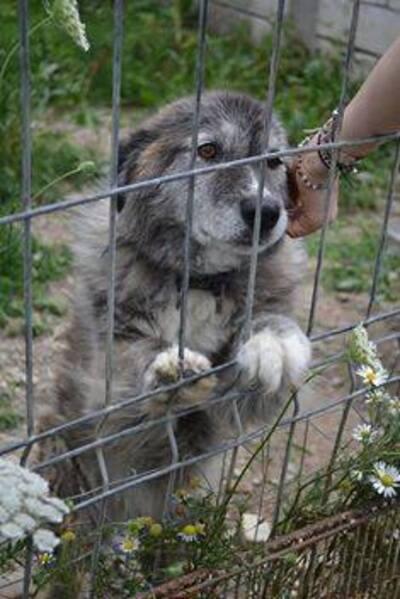 Le refuge ferme , Gros SOS en Roumanie