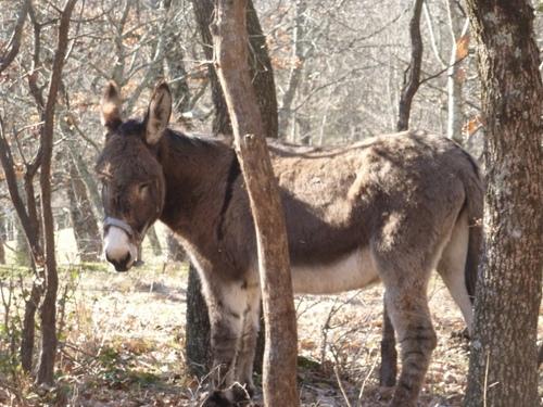 Les Anes et le poney en sous bois