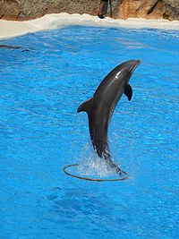 A l'école des dauphins ...