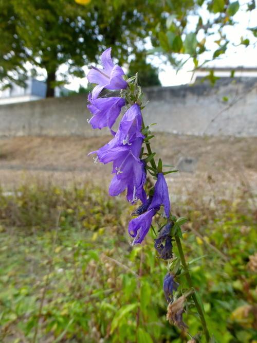 Encore pause: petit jardin botanique des bords de Loire!