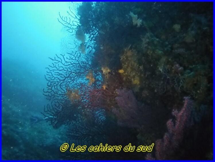 Plongée, Ile de Riou, la pierre à Daniel