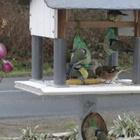 Sur une de nos mangoires, six mésanges et un pinson font bon ménage.